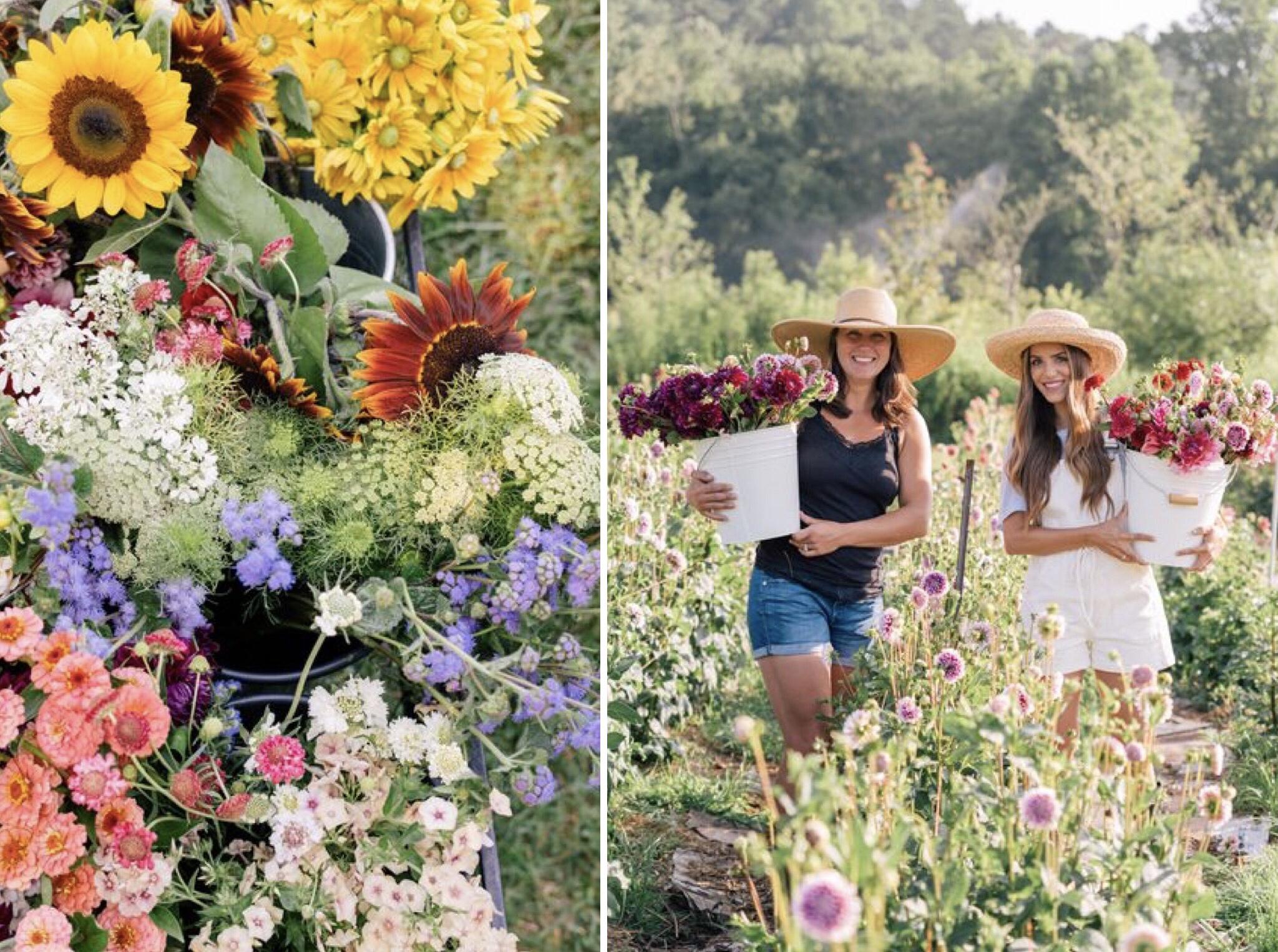 Ferme aux fleurs